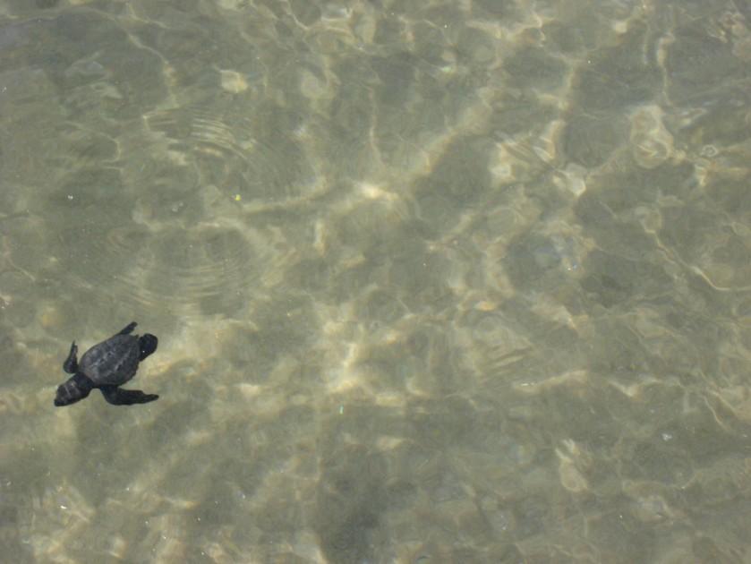 TurtleDive