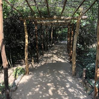 path-w-vines